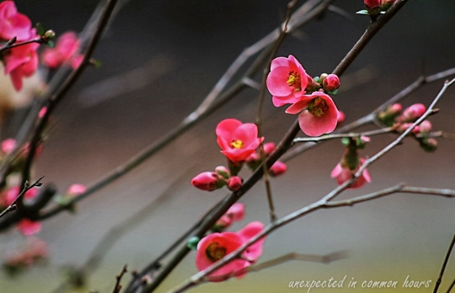 blooms-1