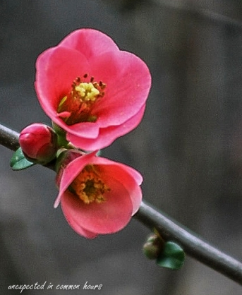 blooms-2