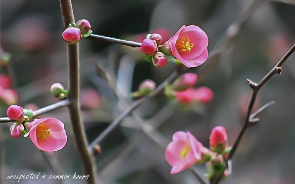 blooms-3