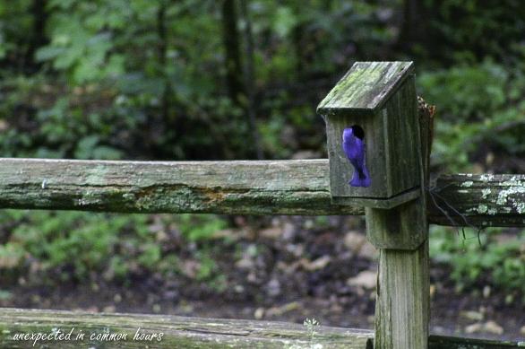 Bluebird 1-1