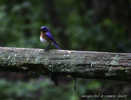 Bluebird 5-1