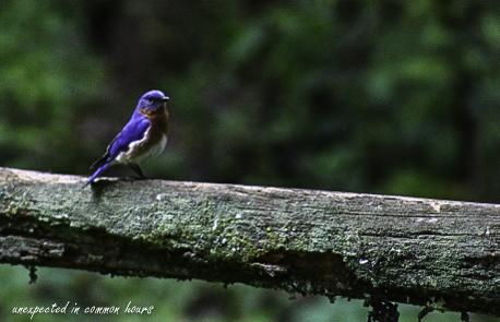 Bluebird 6-1