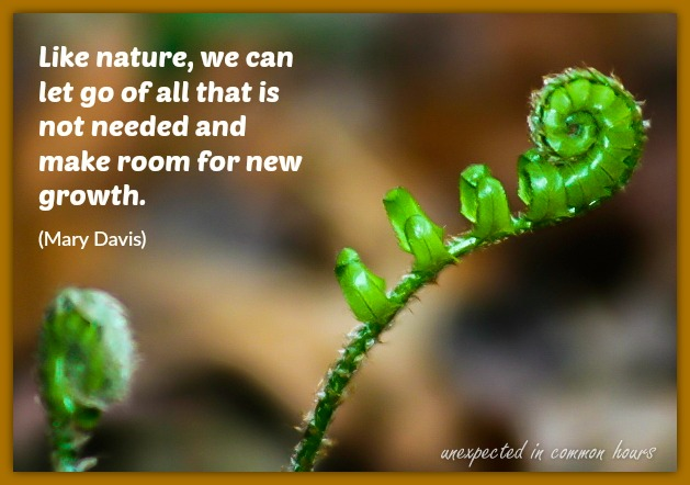 Fiddlehead fern-1