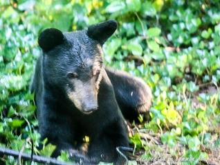 Bear at bird feeder 3