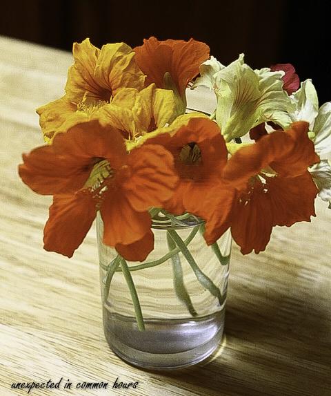 Nasturtium bouquet 2