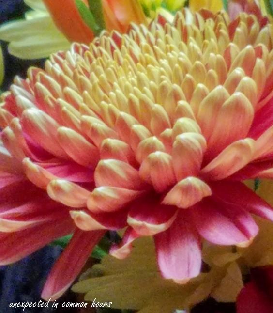Kitchen flowers 3