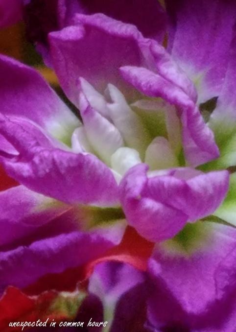 Kitchen flowers 7