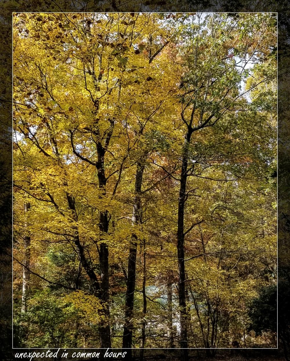 Autumn 1-125628