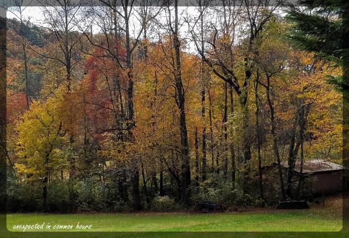 Autumn 2-125251