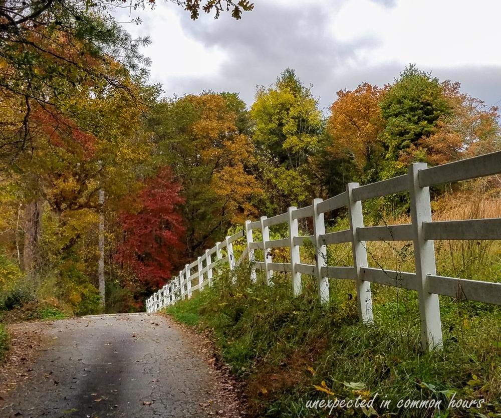 Autumn road (1 of 1)