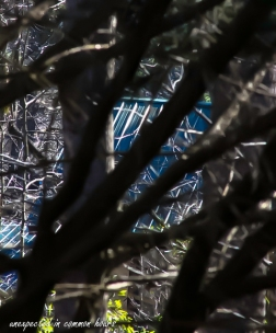 Neighbor's metal roof through the trees