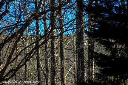 The ridge through the trees