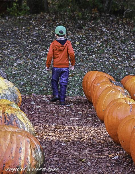 Alone among the pumpkins