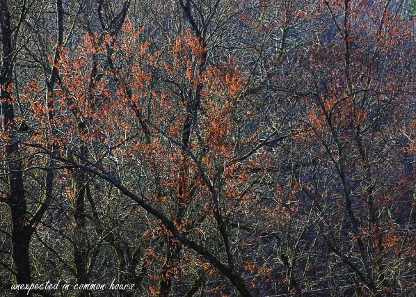 Budding trees2
