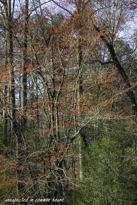 Budding trees3