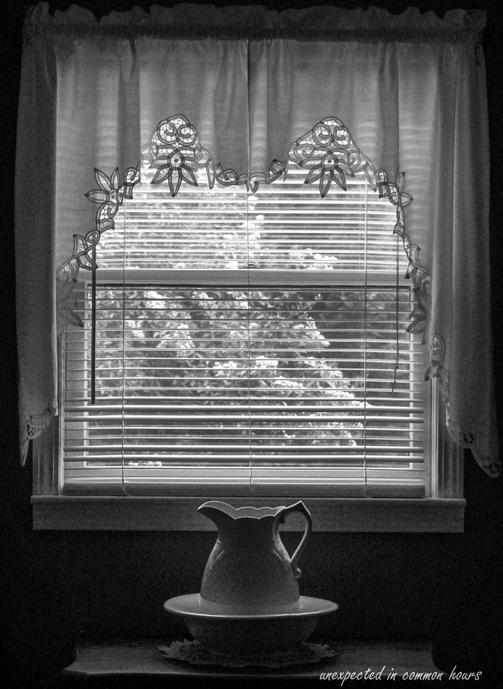 Crape myrtle through the upstairs window