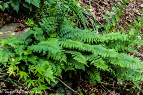 Ferns in the woods