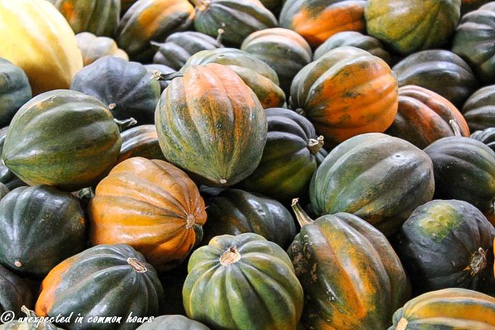 Pile of acorn squash