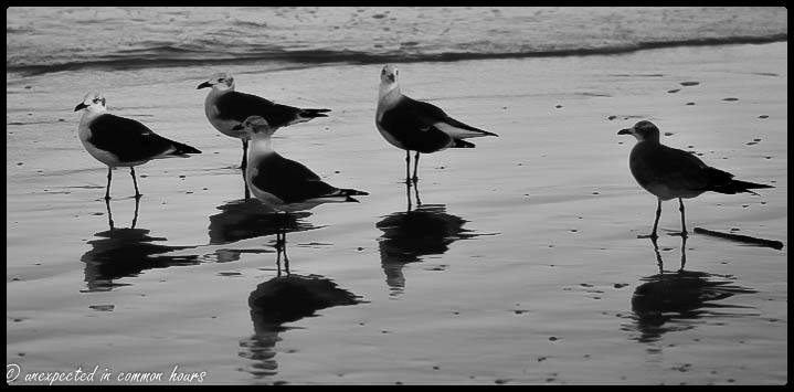 Seagull reflections with border