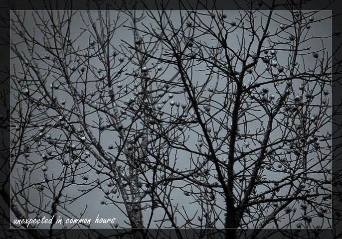 Monochrome trees 2