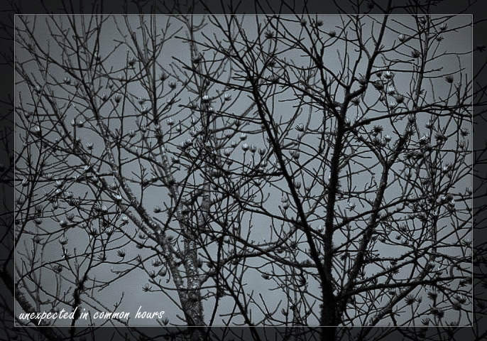 Monochrome trees 2