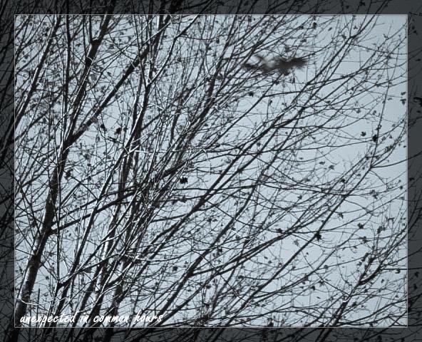 Monochrome trees 4