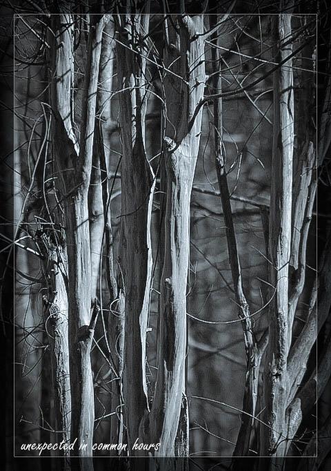 Monochrome trees 5