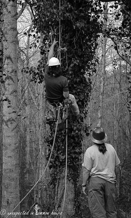 Tree work 2