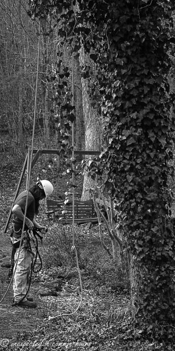 Tree work_