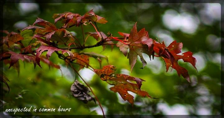 Festival of Leaves Week 4 - 3