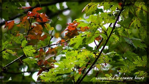 Festival of Leaves Week 4 - 4