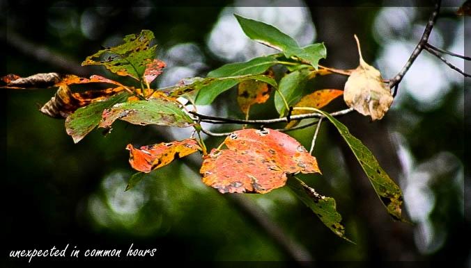 Festival of Leaves Week 4