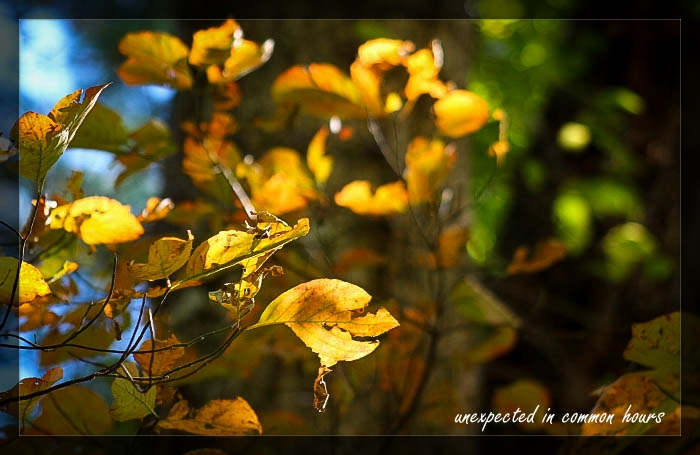 Festival of Leaves Week 5-2