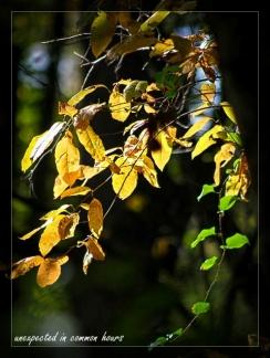 Festival of Leaves Week 5-3