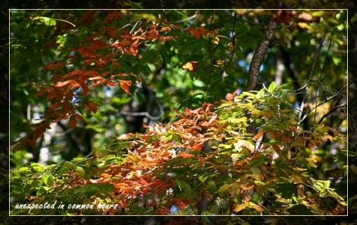 Festival of Leaves Week 5-4