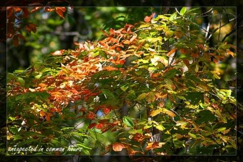 Festival of Leaves Week 5-5