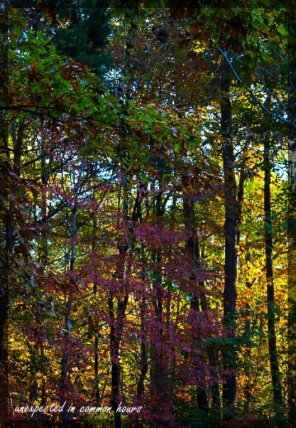From the back deck 5