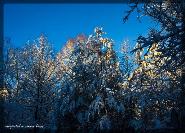 Light on snowy treetops