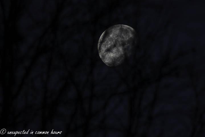 christmas moon 3