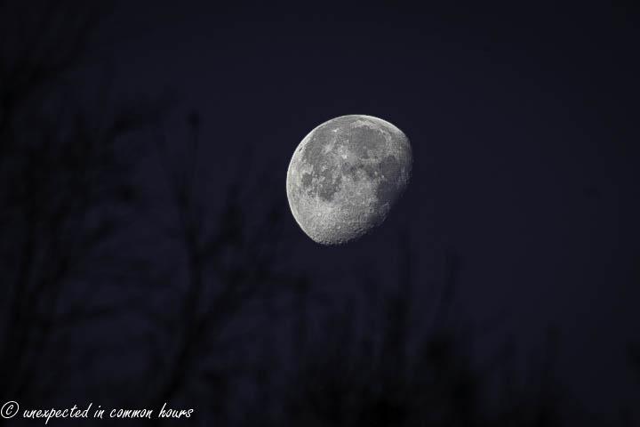 christmas moon 4