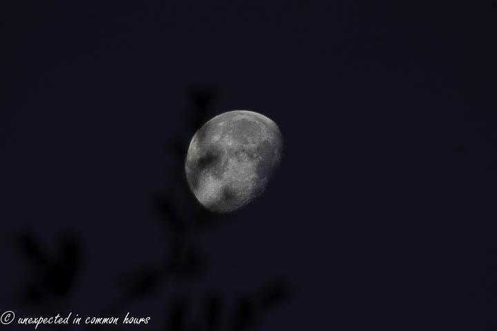 christmas moon