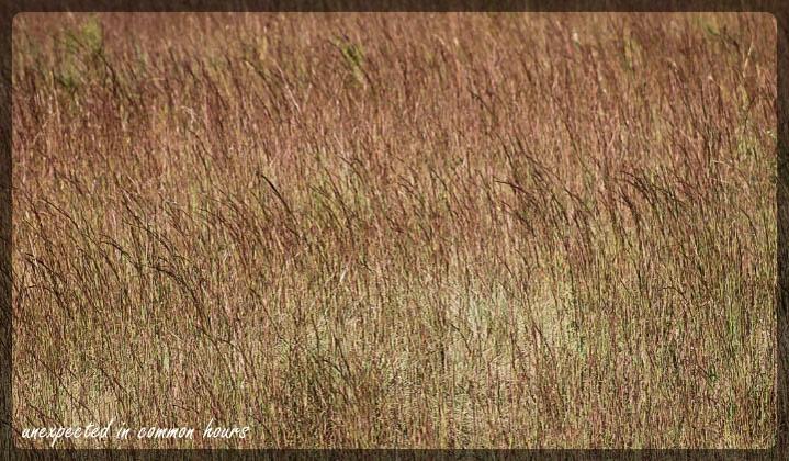field grass 1