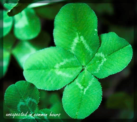 four leaf clover 1