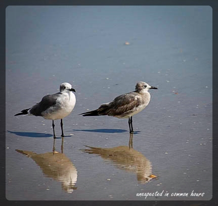 pair of shorebirds