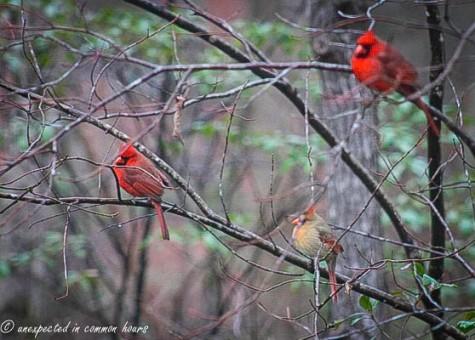 Cardinal 9