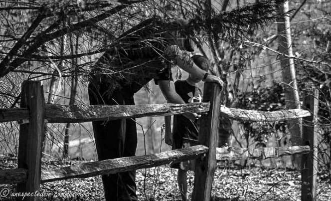Fence on Whistlestop
