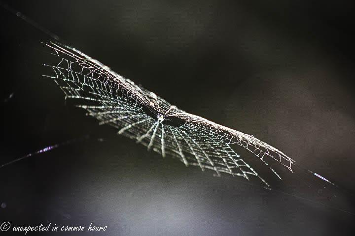 Spider web patterns